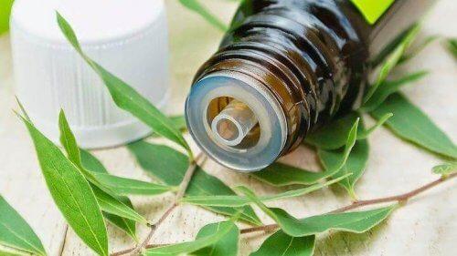 표재성 피부 곰팡이증 자연 치유법