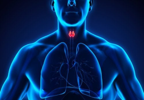 갑상선 건강 향상에 도움 되는 루바브