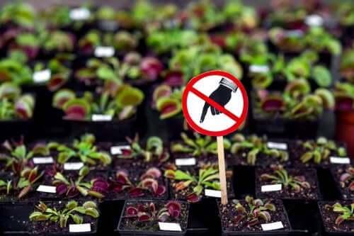 집에 들여서는 안 되는 위험한 식물 7가지