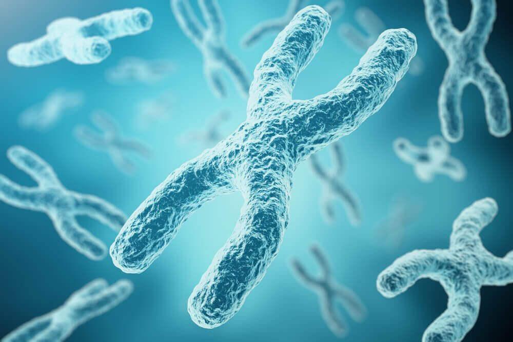 성의 유전적 기원, X염색체와 Y염색체