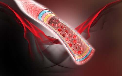 혈액순환을 돕는 4가지 자연 요법