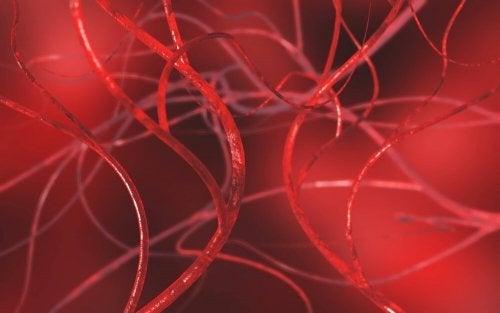 막힌 동맥을 뚫는 데 도움이 되는 4가지 자연 요법