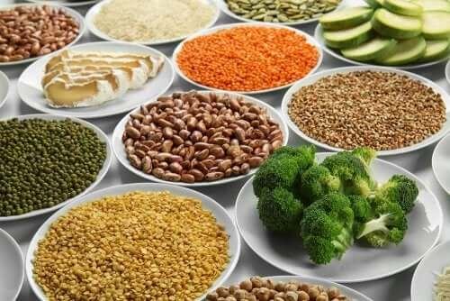 채식 영양소