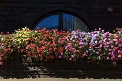 작은 정원에 잘 어울리는 향기로운 꽃 5가지
