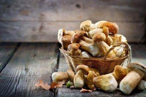 과학적으로 입증된 5가지 최고의 약용 버섯