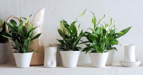 실내 식물 관리에 도움이 되는 9가지 팁