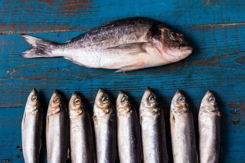 등푸른 생선이 건강에 좋은 이유