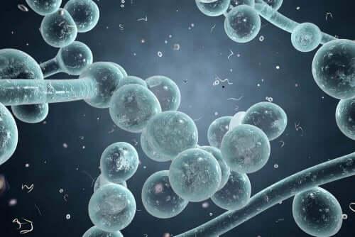 질 효모 감염증에 대해 무엇을 알고 있는가?