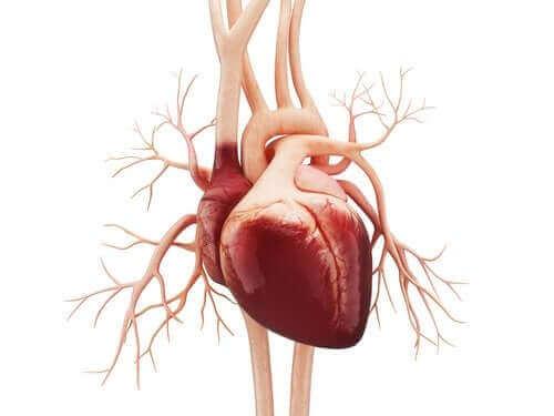 심방조동의 증상 및 원인