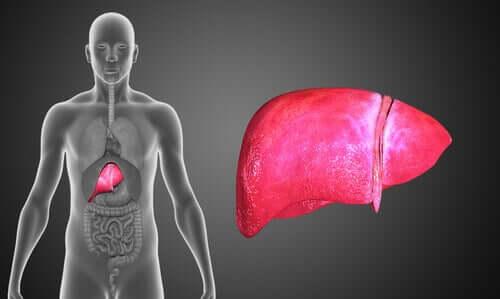 담도 폐쇄증: 증상 및 치료