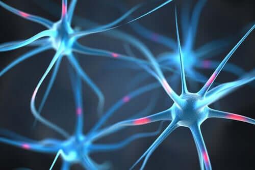 뇌의 지방