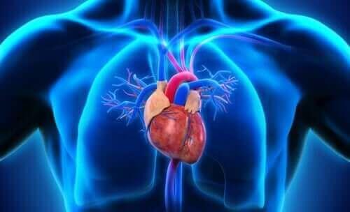 심장의 구성 요소인 방