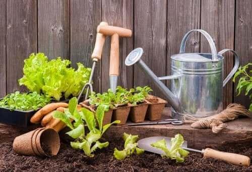 작은 공간에서 도시 정원을 만드는 법