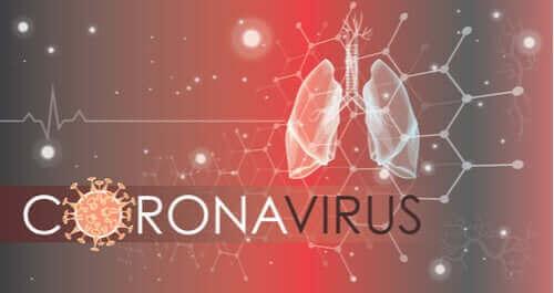 코로나19는 폐세포에 어떤 영향을 미치는가?