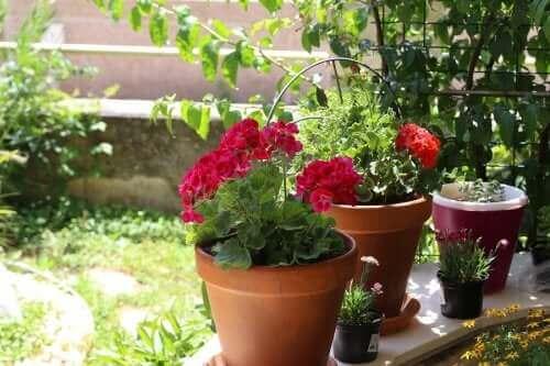 정원을 위한 여름꽃 6가지
