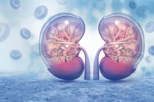 암로디핀 : 주의사항 및 부작용