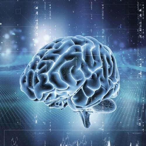 뇌의 보상 시스템 작동 방식