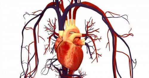 심혈관 질환