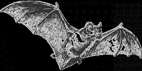 코로나바이러스의 원인은 박쥐다