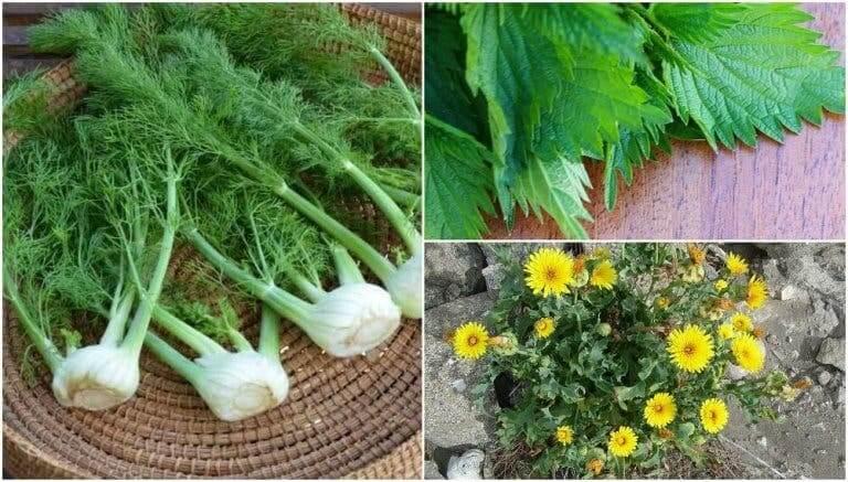 의외로 먹을 수 있는 식용 식물 8가지