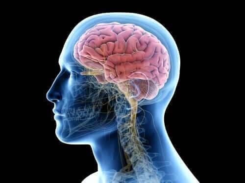뇌염 단순 포진