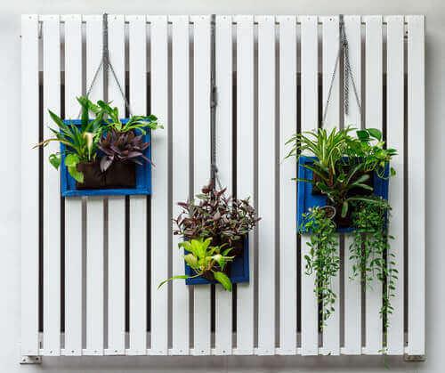 5. 매달아 놓는 식물