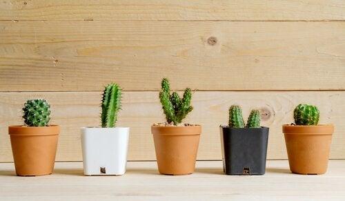 9. 사막 식물
