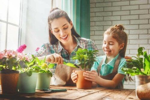 건강을 증진시키는 실내용 화초