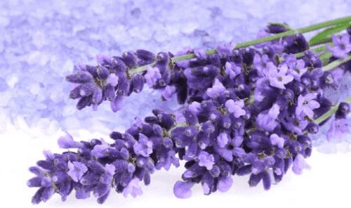 3. 라벤더(Lavender)