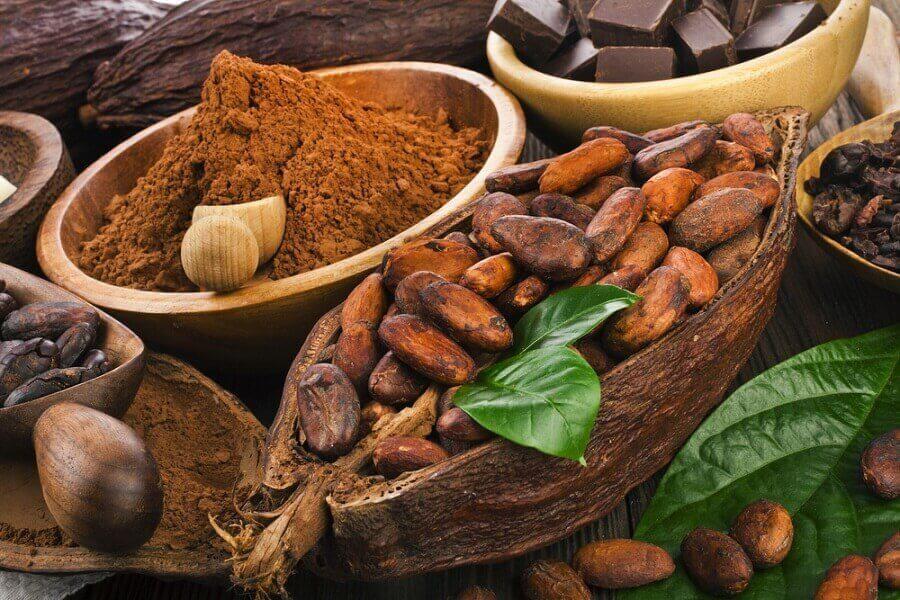 초콜릿의초콜릿의 항암 성분
