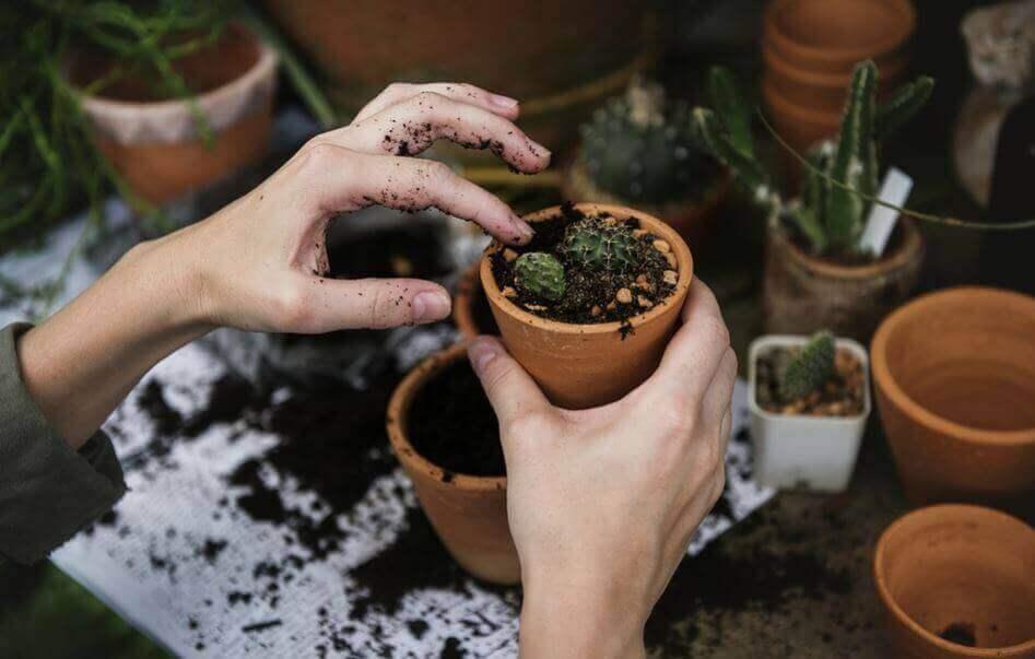 2. 화분 채소 정원