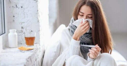 독감 및 감기에 좋은 엘더베리