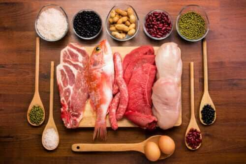 체내 단백질의 기능