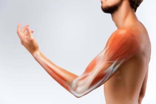 힘줄과 근육을 강화하는 식품 유형