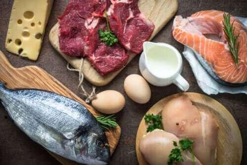 단백질 섭취는 왜 그렇게 중요할까