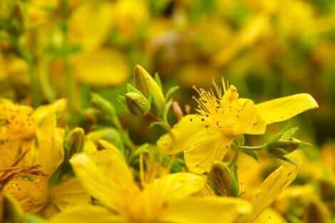 과학적 증거가 있는 최고의 약용 식물 6가지