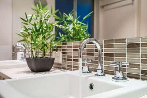욕실을 위한 최고의 식물
