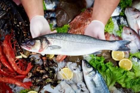 생선에 포함된 수은의 영향