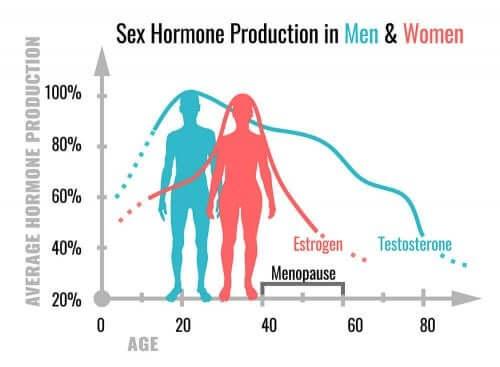 성호르몬의 역할과 기능