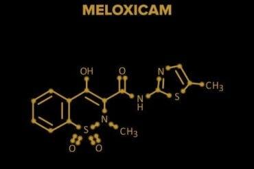 멜록시캄은 무엇일까