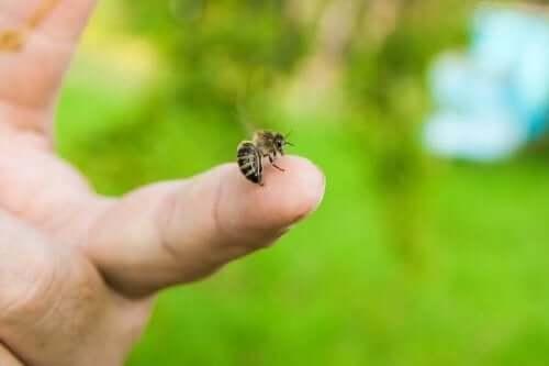 벌에 쏘였을 때 대처 방법