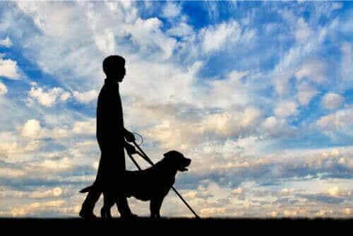 시각 장애의 원인 및 유형