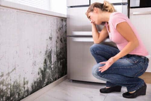 집 안 곰팡이가 일으키는 건강 문제