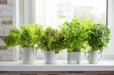 갖가지 요리용 식물을 심는 방법