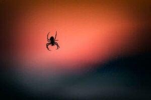 뇌 손상을 줄여 주는 거미 독