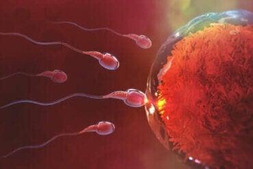 성관계 후 임신까지 얼마나 걸릴까