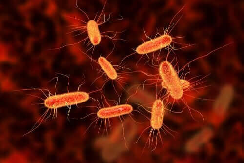 화농성관절염의 원인