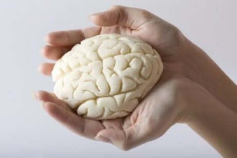 인간의 뇌에