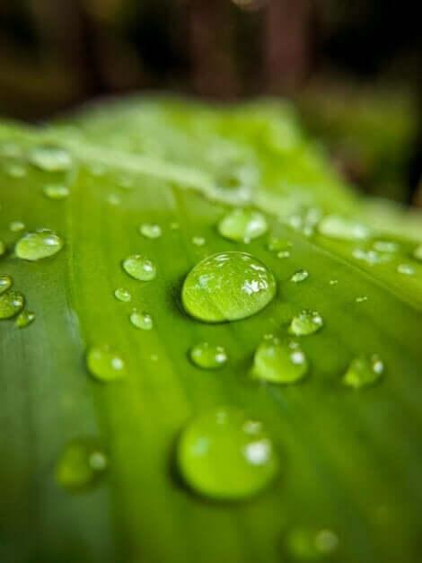 지속 가능한 정원 가꾸기 비결 6가지를 알아보자