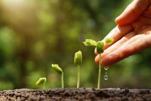 지속 가능한 정원을 가꾸는 6가지 비결